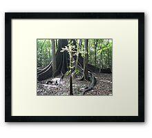 The Forest Giant, Wingham Brush Framed Print