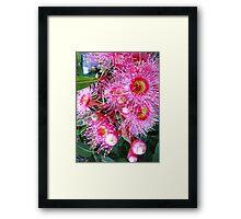 Summertime Gum Blossoms Framed Print