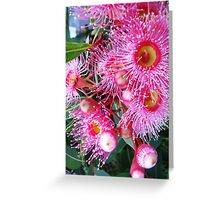 Summertime Gum Blossoms Greeting Card