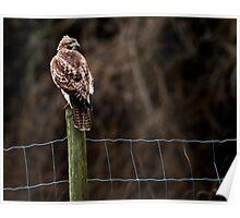 Hawk on a Farm Fence Poster