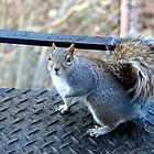 They call me Cool-Hand Squirrel by WalnutHill