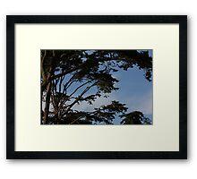 Cedar trees 8778 Framed Print