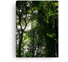 Light in 'The Brush' Canvas Print