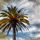 Palm In Los Gatos by Blake Rudis