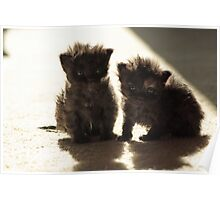 Kittens in sunlight Poster