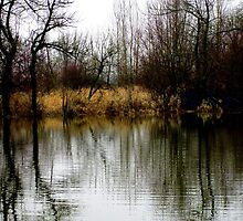 Cottonwood Reflections at Smith and Bybee Wetlands by Patricia  Butler