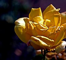 Dusty Yellow Rose - - Cards by Maria A. Barnowl