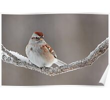 American Tree Sparrow. Poster