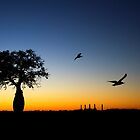 Boab silhouette - Broome summer night. by Earthboundimage