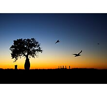 Boab silhouette - Broome summer night. Photographic Print