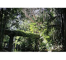 """Jungle"" - Disneyland CA Photographic Print"
