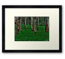 Trees in HDR - 3 Framed Print