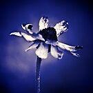 Love is Blue, is it? by Kornrawiee