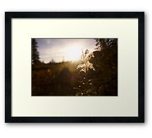 Spiderweb flower Framed Print