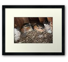 Are You My Mother? Framed Print