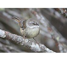 Birdy Intrigue Photographic Print