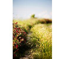 Toscana #6 Photographic Print