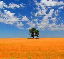 Lone Tree in Outback Victoria by Paul Campbell  Photography