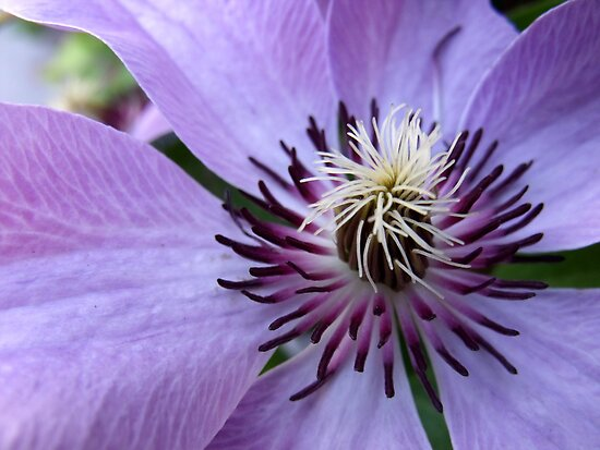 I think I need Clematis by LouJay