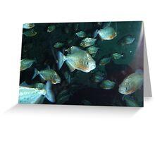 Piranha!!! Greeting Card
