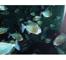 Piranha!!! Photographic Print