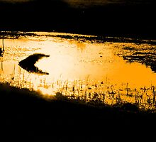 golden pond by JohnHDodds