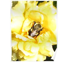 A Bummble Bees Nap Poster