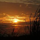 #486    Grass Silouette & Sunset by MyInnereyeMike