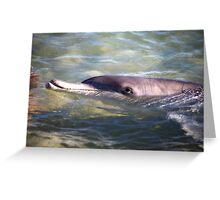Dolphin at Monkey Mia Western Australia Greeting Card