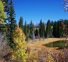 Fall in Colorado by Dawn Parker