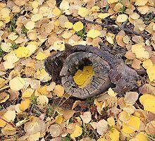 Aspen Swirl by Dawn Parker