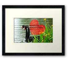 Could You Be Mine... Swans - NZ Valentines Card Framed Print
