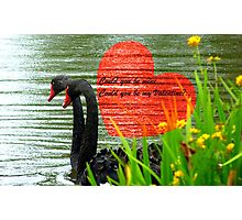 Could You Be Mine... Swans - NZ Valentines Card Photographic Print