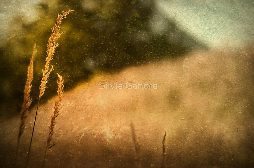 Late in the Summer by Silvia Ganora
