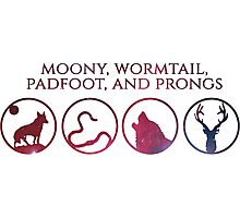 Moony, Wormtail, Padfoot, Prongs Photographic Print