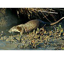 Beautiful Otter Photographic Print