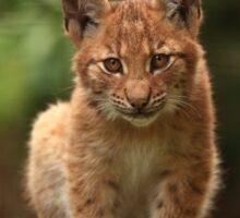 Baby Lynx II Sticker