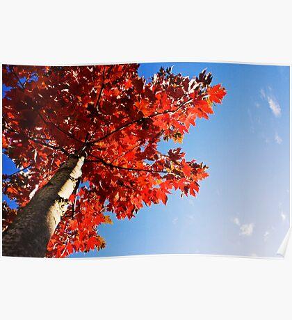 Fall Day - Bonney Lake, WA Poster