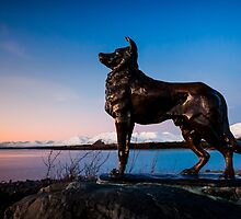 Tekapo Sunset Dog by Russell Charters