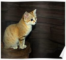 """Is This Pose Good For You"" (Sand Cat) Poster"
