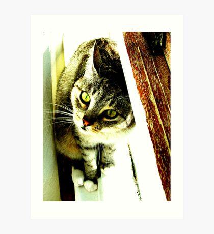 Green Eyed Feline Art Print