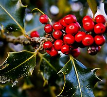 Happy Holly-days - Kent, WA by nalliston
