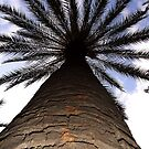 Look up! by eppixx