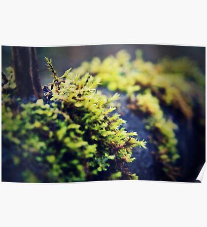 Lump on A Log - Kent, WA Poster