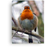 Plump Robin! Canvas Print