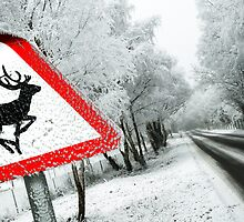 """Reindeers .....NO!""  by Summersby"