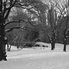 Powder in Central Park by BlackSwan