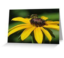 Green Metalic Bee on Blackeyed Susan Greeting Card