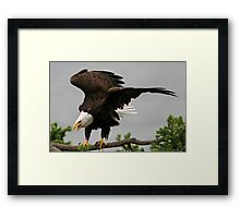 Just Landed Framed Print