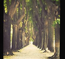 Lucca #1 by dgt0011